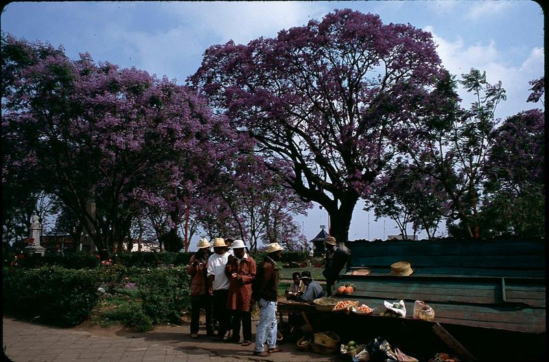 Madagasgar1_008.jpg