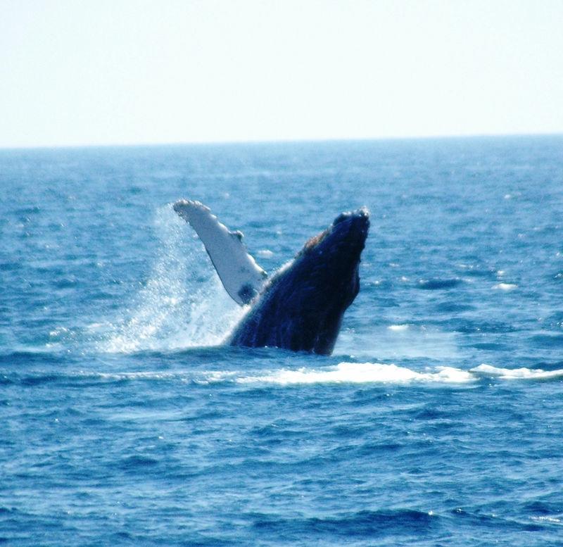 whale waves.JPG