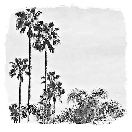 California Wall Art Black and White