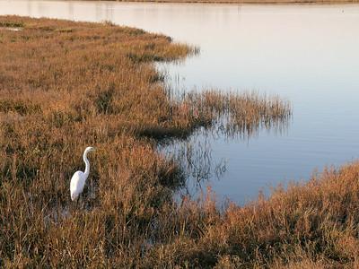 Huntington Habor Wetlands - Sept. 2006 & 2008