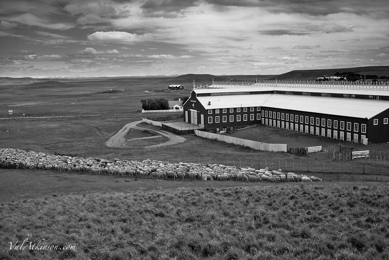 Maria Behety sheep shearing barn