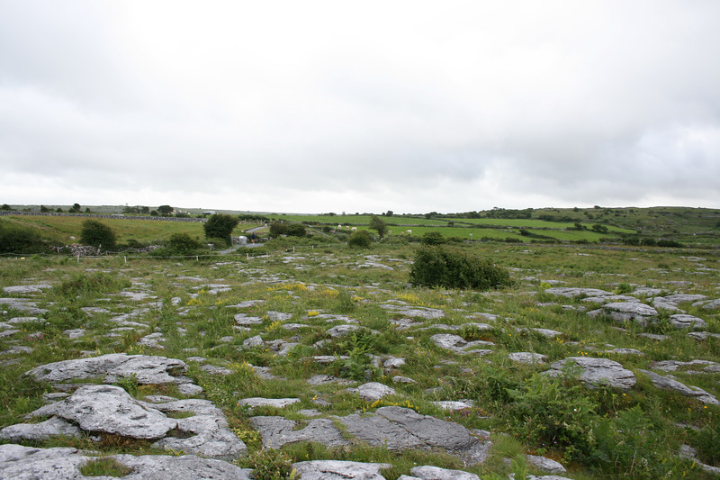 The Burren is formed of rough, cracked limestone known as karst.  The surface of the limestone is fractured into deep, narrow channels (grykes) a few inches wide but several feet long, with oblongs of rock (known as clints) of varying sizes islanded among them.  However is does have sufficient soil to grow a wide variety of the most unusual and rarest of plants, many of them strange bedfellows. A fine collection of alpines and Mediterranean species grows together in this limestone area with, strangely, some of them being lime-hating plants.