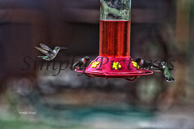 Hummers  (15)