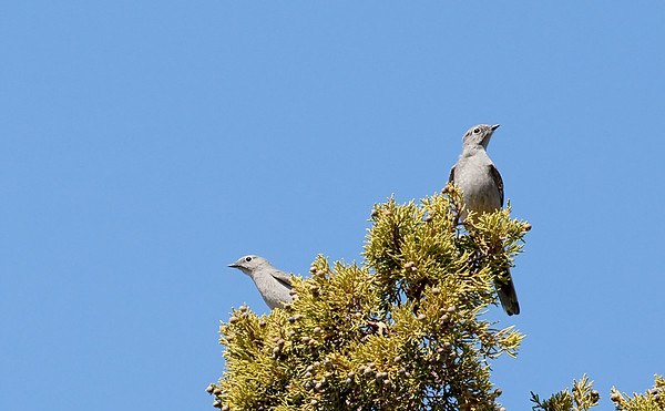 Townsends Solitaire