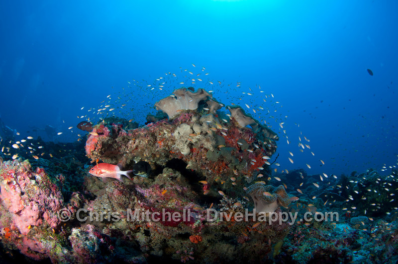 maldives-scuba-diving-april-2011-14.jpg