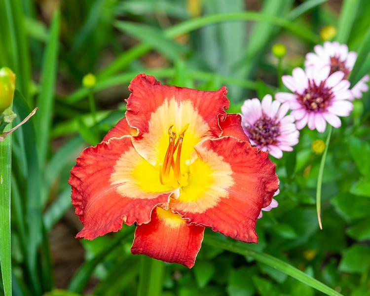 20190718 Daylilies and Flowers-6464.jpg