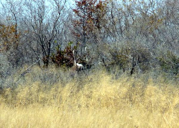 2011 AUG 19 Safari day 5