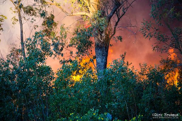 16Jun - Bushfire Framesby Gardens