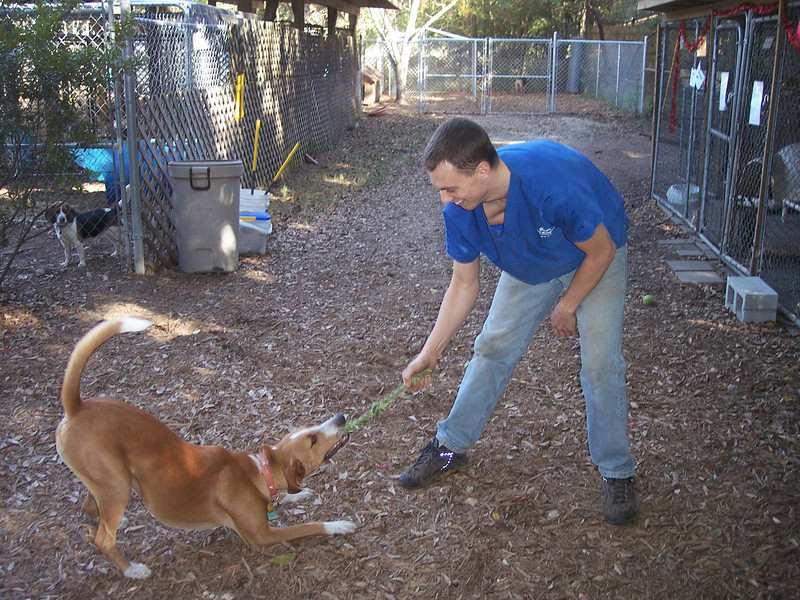 Mike O'Connell and Elvis having a good game of tug in the play yards at 1430