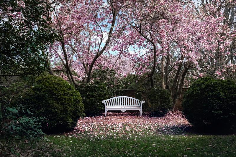 Flowers033019-44.jpg