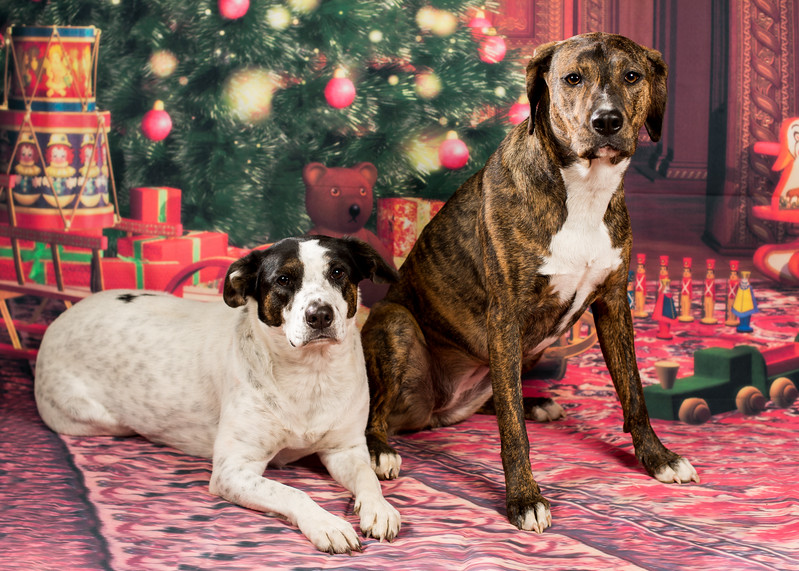 Abby and Bella Christmas 2017