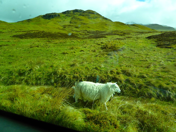 Day2Part1 - Wildlife & Fortingall Church