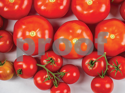science-do-not-refrigerate-your-tomatoes