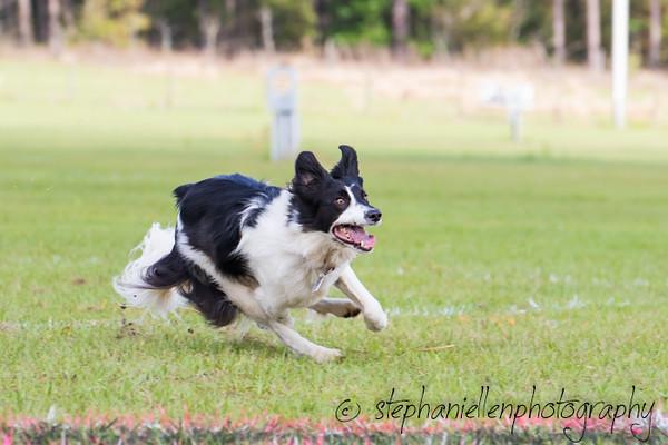 _MG_2765Up_dog_International_2016_StephaniellenPhotography.jpg