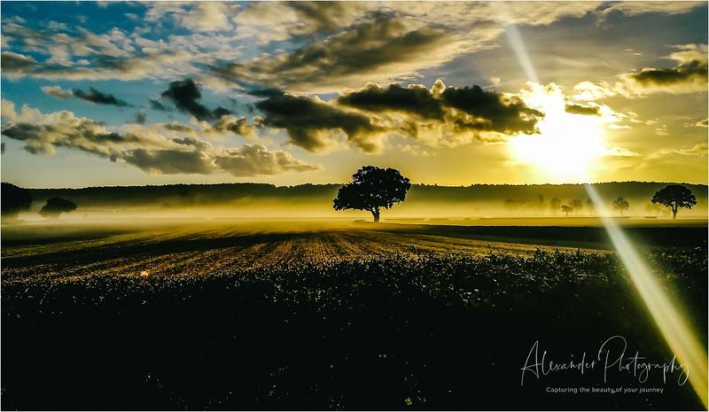 Alexander photography
