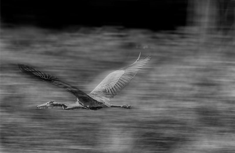 Motion Blur Egrit.jpg