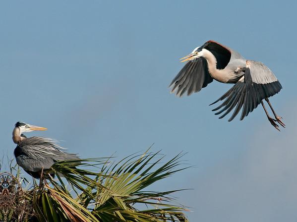Viera Wetlands - Feb 21 & 24, 2012