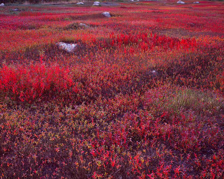 Red Field with Stones