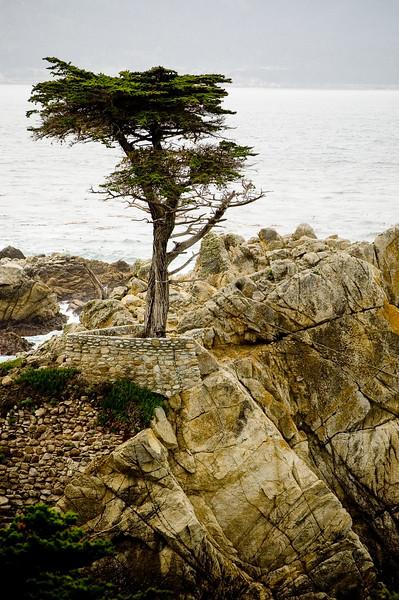Left_Coast_036_Print.jpg