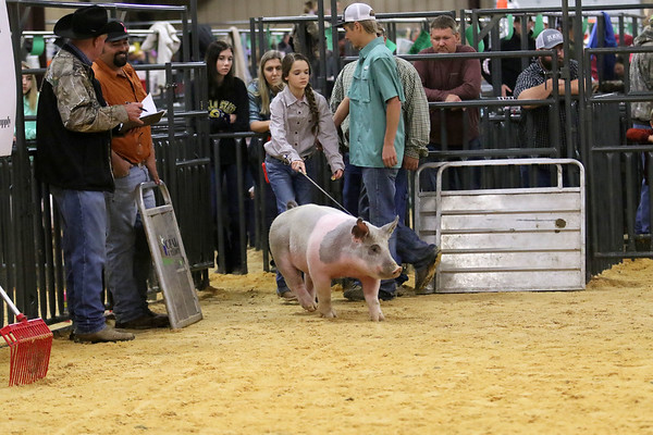 Swine-Crosses