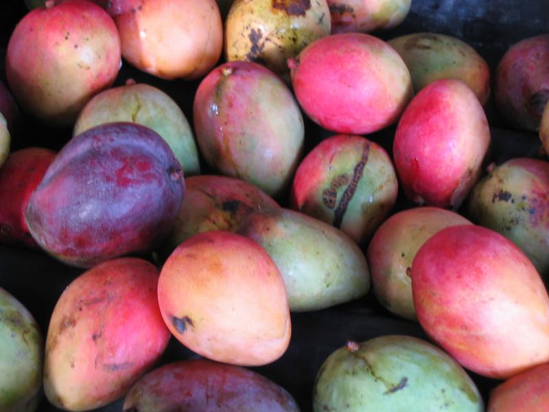 Mango's. Tortuguero, Costa Rica.