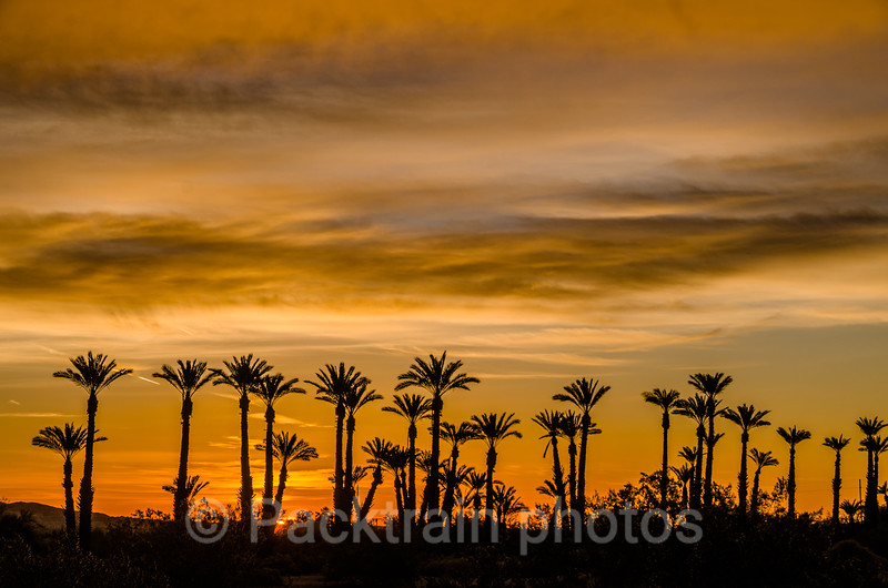 Borrego Palms at Sunset - BPS - 1