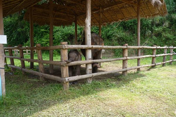 2011 OCT 20 ELEPHANTS