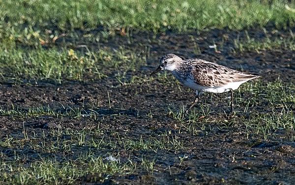 21-Aug Parker River Birding