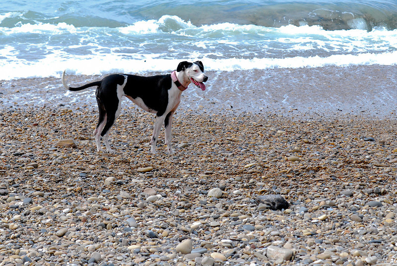 dogs_beach-035.jpg