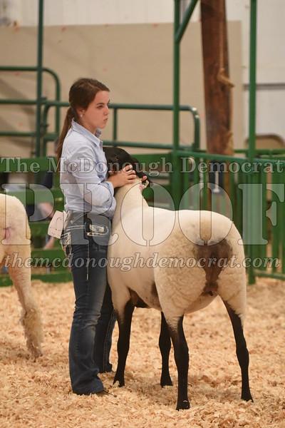 Sheep Show 07-11-17