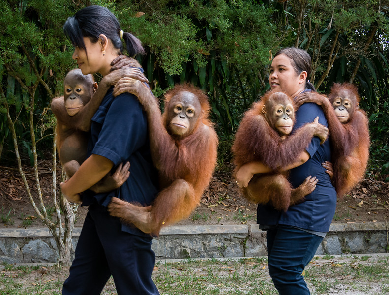 Borneo-2223.jpg