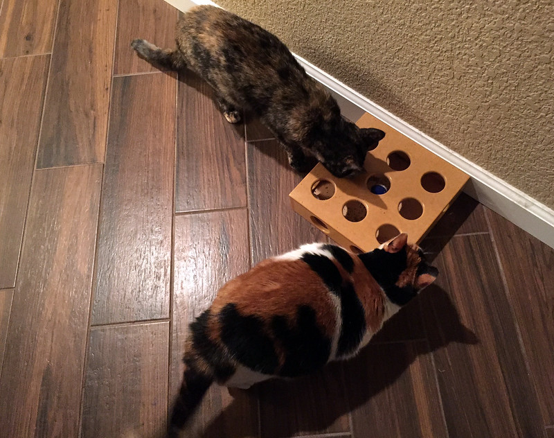 smart box for cats.jpg