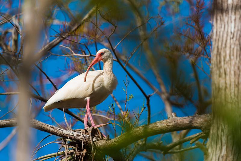 Everglades (14 of 60).jpg