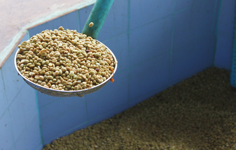The beans are fermented/soaked in three, 24-hour stages before drying and roasting