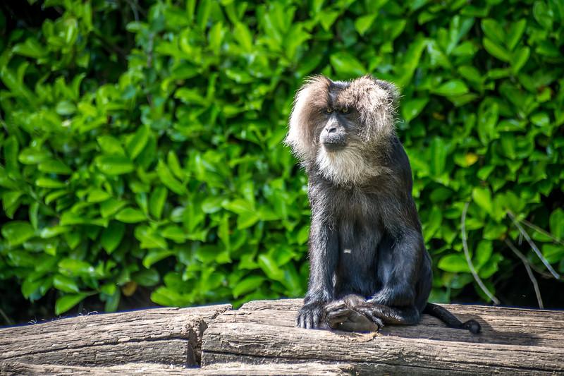 Zoo Parc Overloon_15062013 (105 van 178).jpg