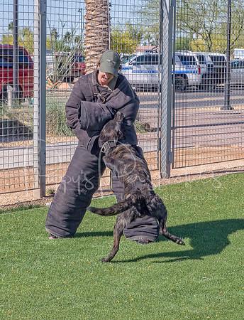 2016 Desert Dog Police K9 Trials (Goodyear, AZ.)