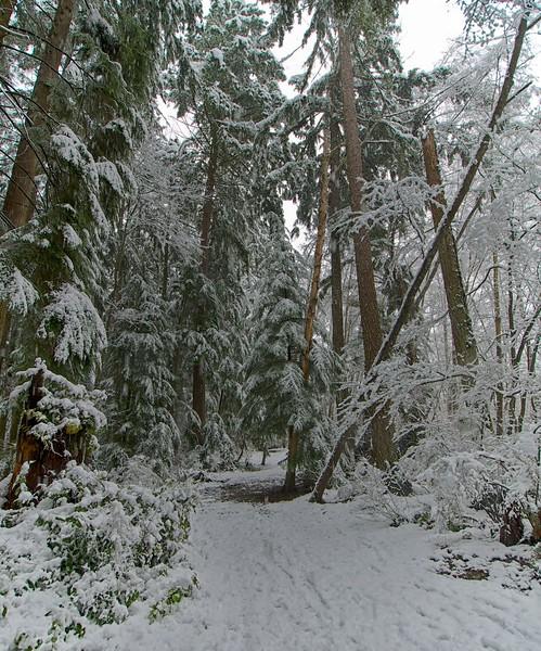 Snow day 1 236.jpg