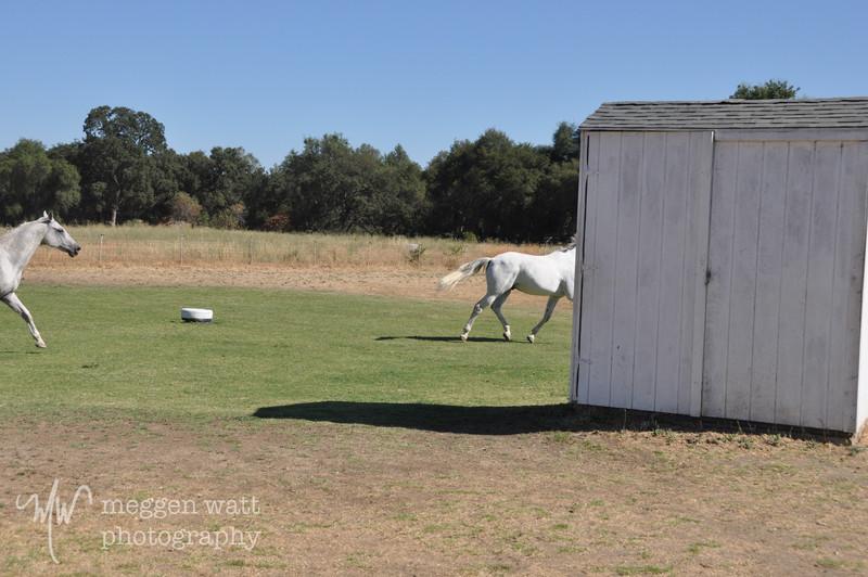 EB&Horses-110.jpg