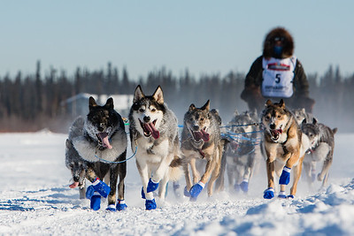 Select Iditarod and other Mushing Photos