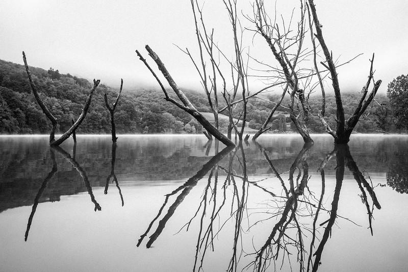 DEAD_TREES_INWATER_REFLECTIONS_LAC_DE_CASTELNAU_AVEYRON.jpg