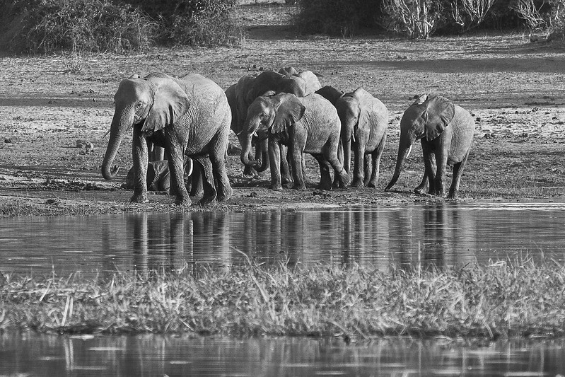 Africa-29.jpg
