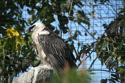 San Diego Zoo 1/13/06