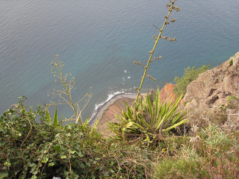 "Funchal, Madeira - Atop the ""highest sea cliff in Europe"""
