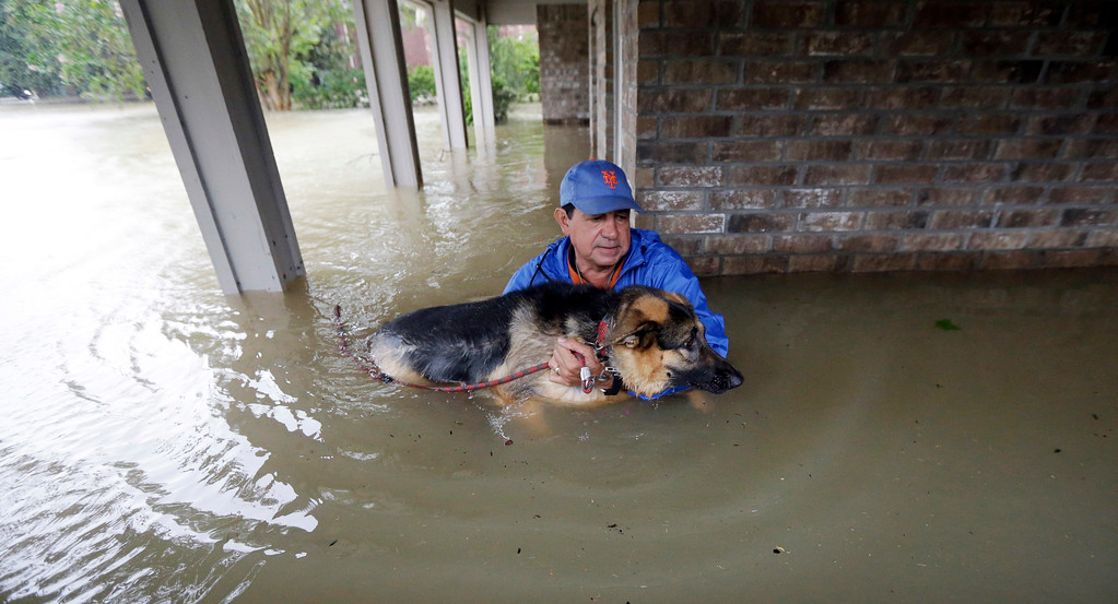 . Joe Garcia carries his dog Heidi from his flooded home as he is rescued from rising floodwaters from Tropical Storm Harvey on Monday, Aug. 28, 2017, in Spring, Texas. (AP Photo/David J. Phillip)