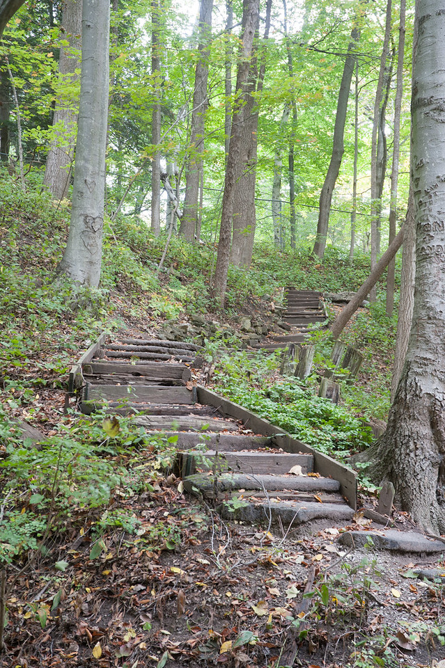 Forest Stairs - RAW file straight out of the camera