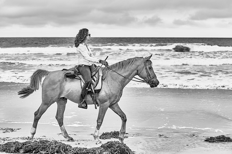 _DSC20690159@Catherine Aranda-LearnedOceanMeadowview©CAL..jpg