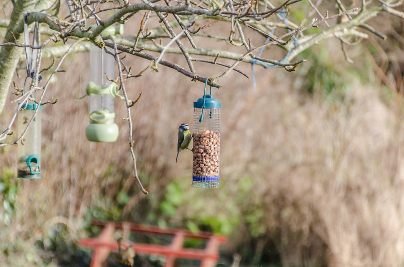 Birds 180118-61.jpg