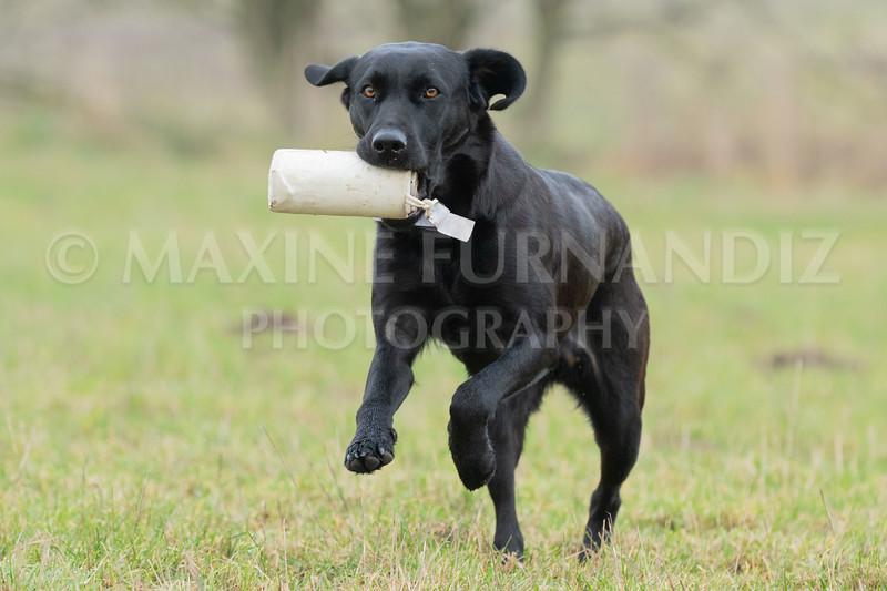 Dogs Jan 2019-4818.jpg