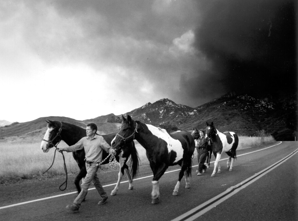 . Charlie Cox and Stacy Fields lead horses from Cox\'s property on Piuma Road in the Santa Monica Mountains area to escape the flames.   (11/2/93)   Los Angeles Daily News file photo
