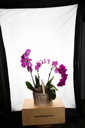 Orchid Sample Proofs